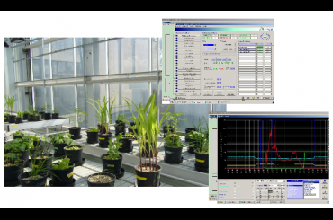 Phytotron and Greenhouse