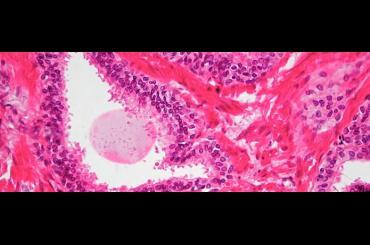 Histology Platform